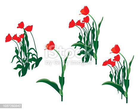 Red tulips vector design