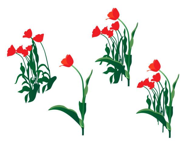 Rubin rote Tulpen – Vektorgrafik