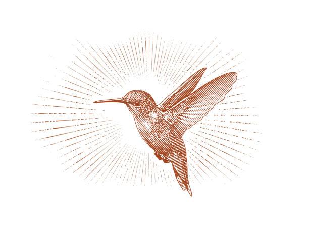 ruby throated hummingbird flying - hummingbird stock illustrations