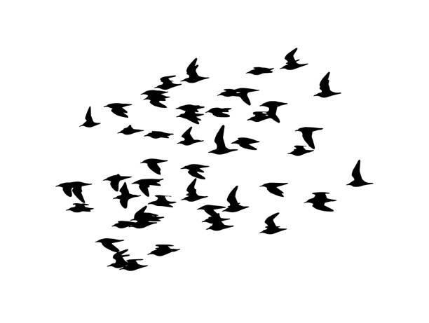 ruff (calidris pugnax) in flight - bird watching stock illustrations, clip art, cartoons, & icons