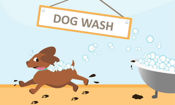Runaway Dog Wash from Bubble Bath Dog running away from a bubble bath from a dog wash service