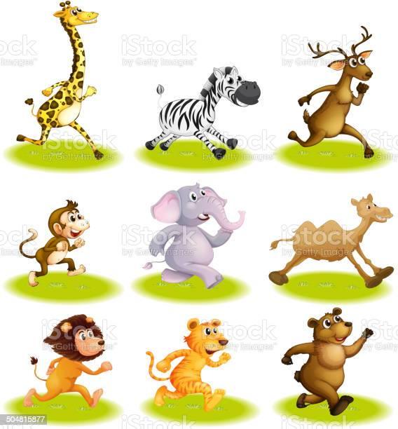 Running animals vector id504815877?b=1&k=6&m=504815877&s=612x612&h=yigj4crs7cptsc7tfyy0onl6fhtygjt3knmcfxbknak=