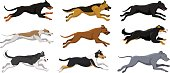 Running dogs vector illustration