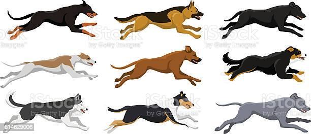 Running dogs vector illustration vector id614629006?b=1&k=6&m=614629006&s=612x612&h=0kct9lz1rkj2ynpibofydftuypgk2m2irg8qwqzjx7q=