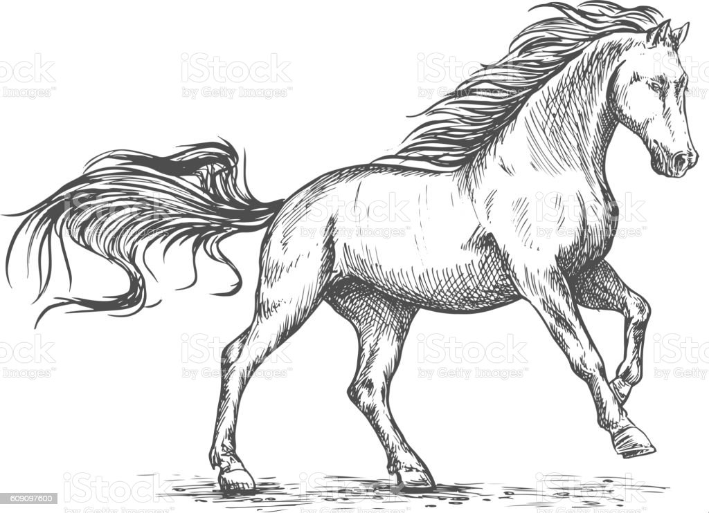 Running galloping white horse sketch portrait vector art illustration
