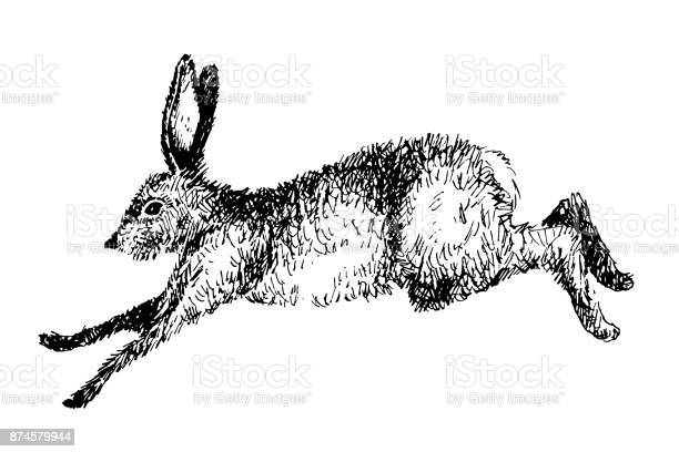 Running hare rabbit vector illustration hand drawn ink jumping bunny vector id874579944?b=1&k=6&m=874579944&s=612x612&h=8iirr1tq69v32pjvtpgz 968txn8tbswr6gpoq6v2wu=