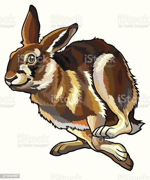 Running hare vector id474953587?b=1&k=6&m=474953587&s=612x612&h=nebs0gonzcg9ega4b4dvvlolno7uvp8v50famasdv2m=