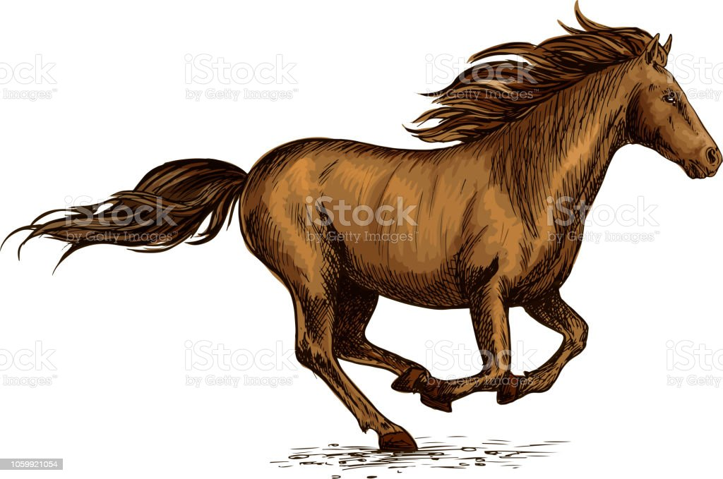 Running Horse Sketch For Equestrian Sport Design Stock Illustration Download Image Now Istock