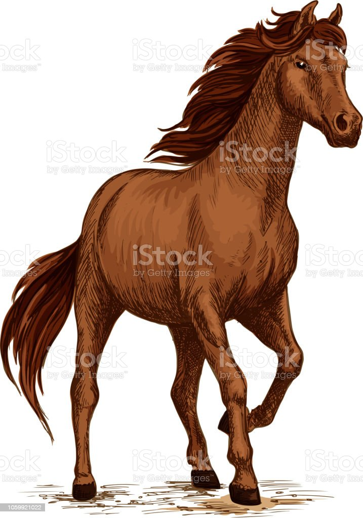 Running Horse Sketch With Brown Arabian Stallion Stock Illustration Download Image Now Istock