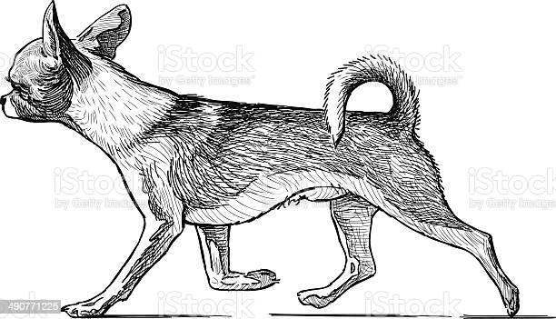 Running lap dog vector id490771225?b=1&k=6&m=490771225&s=612x612&h=ozjcqagzlb1z8hv0pgicv2lmo0edkblkddbdhxgnb6k=
