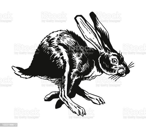 Running rabbit vector id1003196612?b=1&k=6&m=1003196612&s=612x612&h=ucs3oqksstbpridlyplyy7dhf hwgdha7doegs4qiru=
