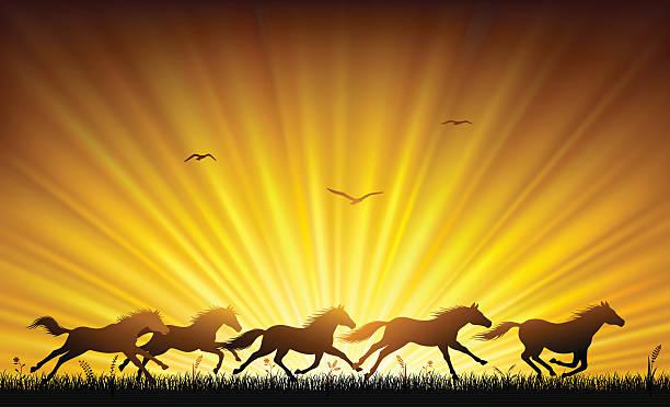 wilde pferde laufen - mustangs stock-grafiken, -clipart, -cartoons und -symbole