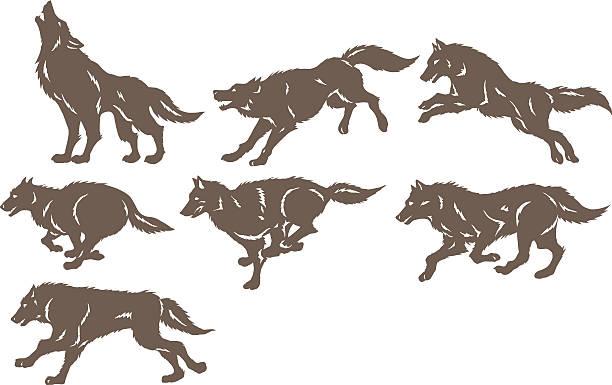 illustrazioni stock, clip art, cartoni animati e icone di tendenza di esecuzione di lupi - lupo