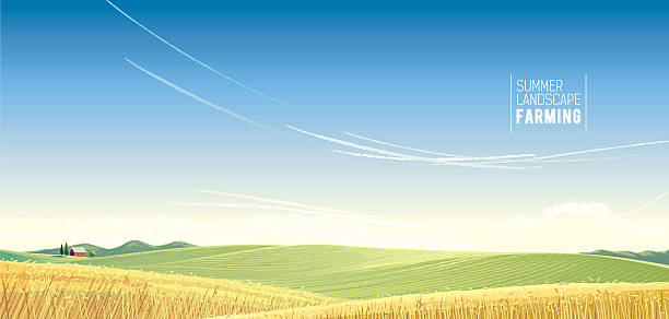 Rural landscape. Rural landscape with wheat and house, is created for use as a background image. agricultural field stock illustrations