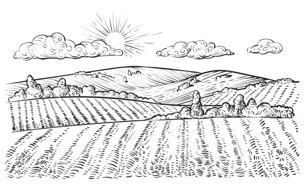Rural landscape, vector vintage hand drawn illustration. Rural landscape, vector vintage hand drawn illustration in engraving style. Peaceful farming scene with hills, meadows and pasturage. agricultural field stock illustrations