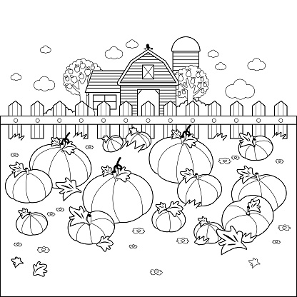 Rural landscape with a pumpkin field and a farmhouse. Vector black and white coloring page