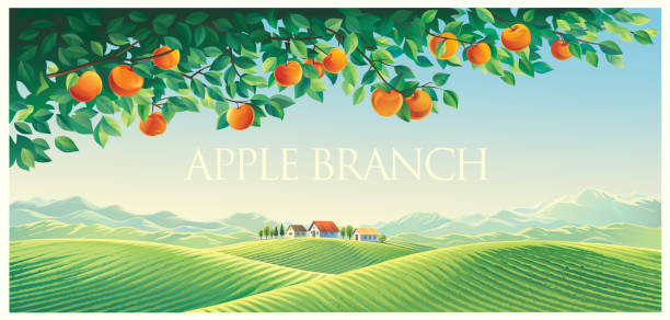 Rural landscape with branch of an apple tree vector art illustration