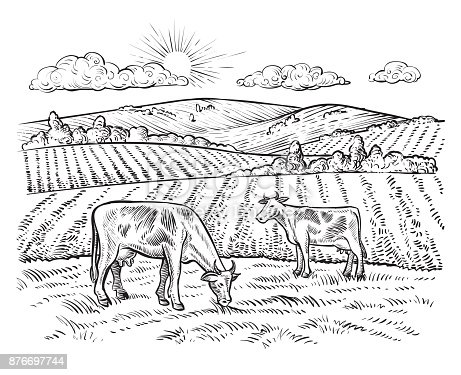 Rural landscape with cows. Vector vintage hand drawn illustration in engraving style. Peaceful farming scene with hills, meadows and pasturage.