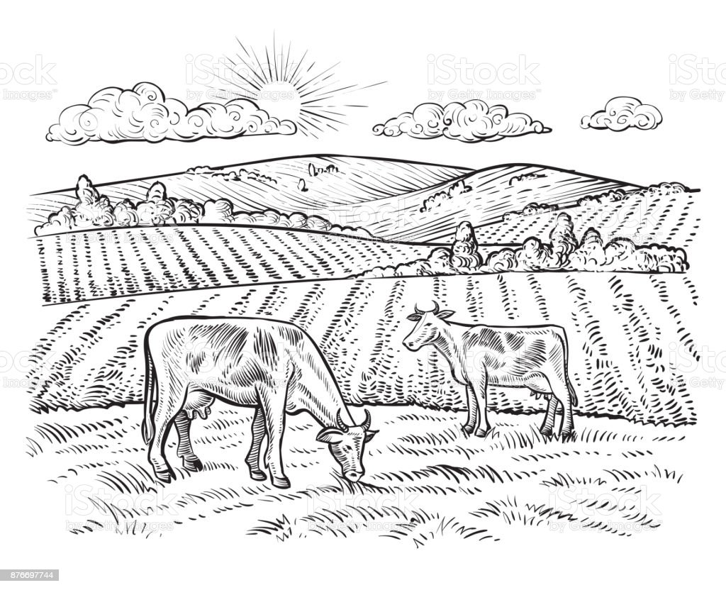 Rural landscape with cows. Vector vintage farm. vector art illustration