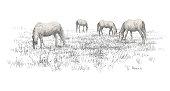Group of horses on rural meadow field