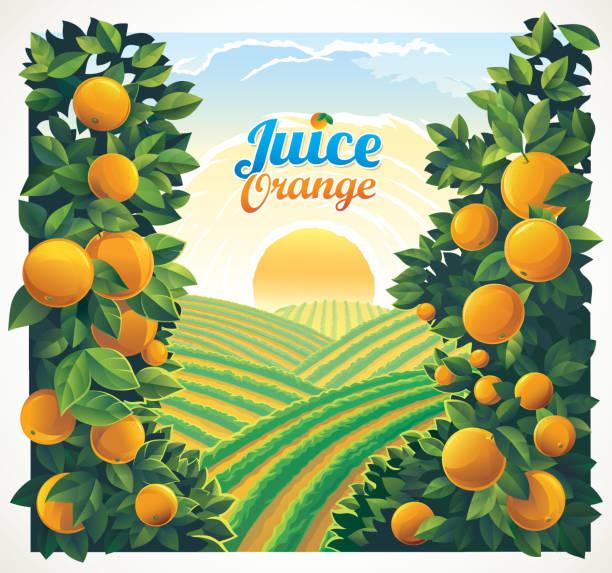 Rural landscape with oranges branches vector art illustration