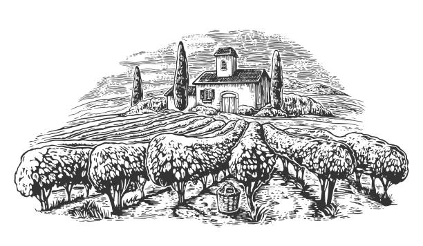 Rural landscape with villa, vineyard fields and hills. Black and white drawn vintage vector illustration for label, poster Rural landscape with villa, vineyard fields and hills. Black and white drawn vintage vector illustration for label, poster. villa stock illustrations