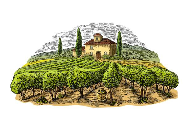 Rural landscape with villa, vineyard fields and hills. Vector engraving Rural landscape with villa, vineyard fields and hills. Vector color vintage engraving isolated on white background. Hand draw design illustration for label or poster. villa stock illustrations