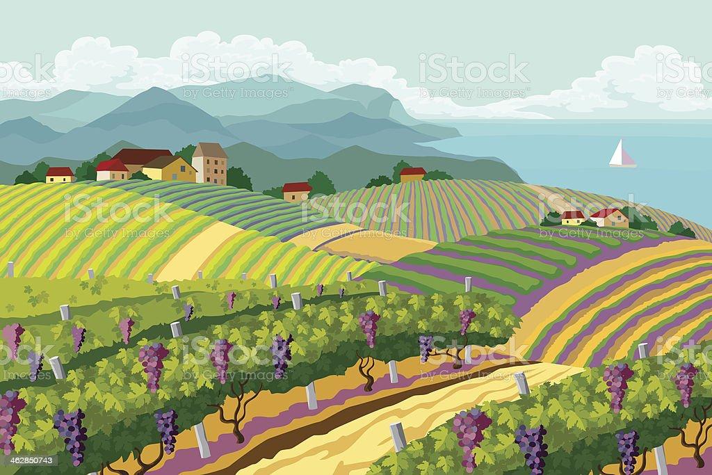 Rural landscape with vineyard. vector art illustration