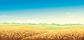 Rural landscape with wheat fields and green hills on background. Vector illustration.