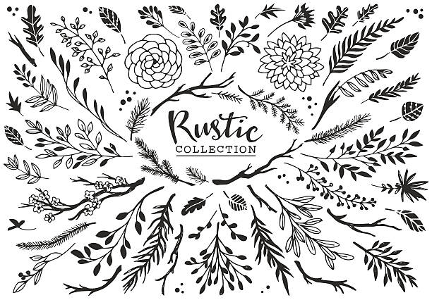 Rustic Decorative Plants And Flowers Collection Vector Art Illustration