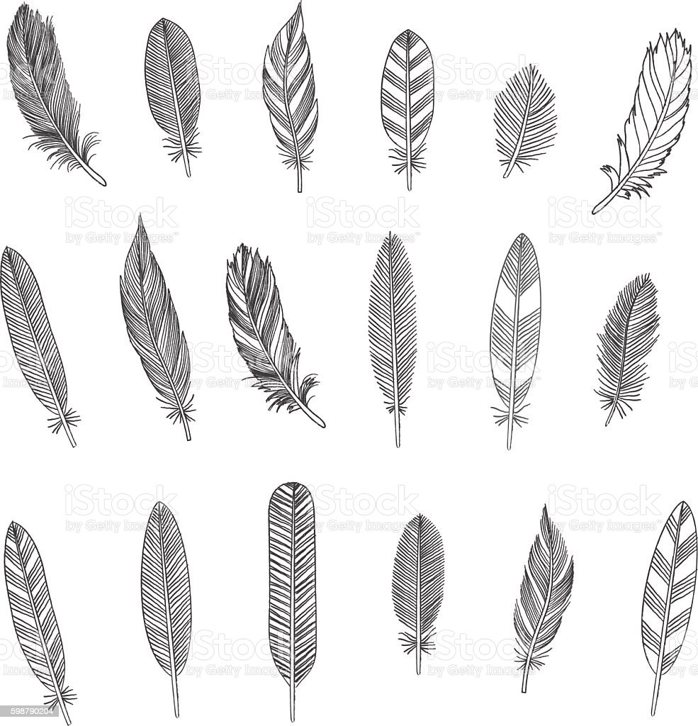 Rustic Feathers vector art illustration