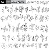 Rustic hand drawn ornaments with branches and leaves. Vector floral frames and borders. Branch floral vintage, illustration of sketch flower and leaf