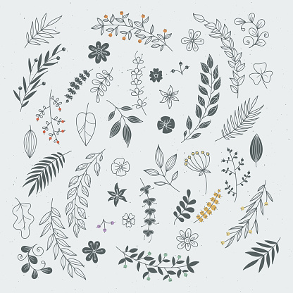 Rustic hand drawn ornaments with branches and leaves. Vector floral frames and borders