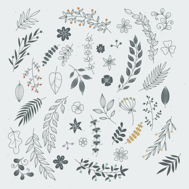 illustrazioni stock, clip art, cartoni animati e icone di tendenza di rustic hand drawn ornaments with branches and leaves. vector floral frames and borders - foglie