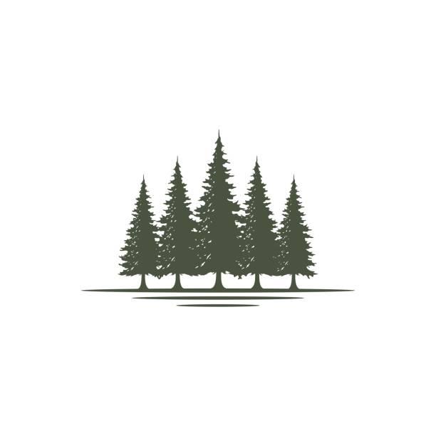 illustrazioni stock, clip art, cartoni animati e icone di tendenza di rustico retro vintage evergreen, pini, abete, cedro alberi di design - albero sempreverde