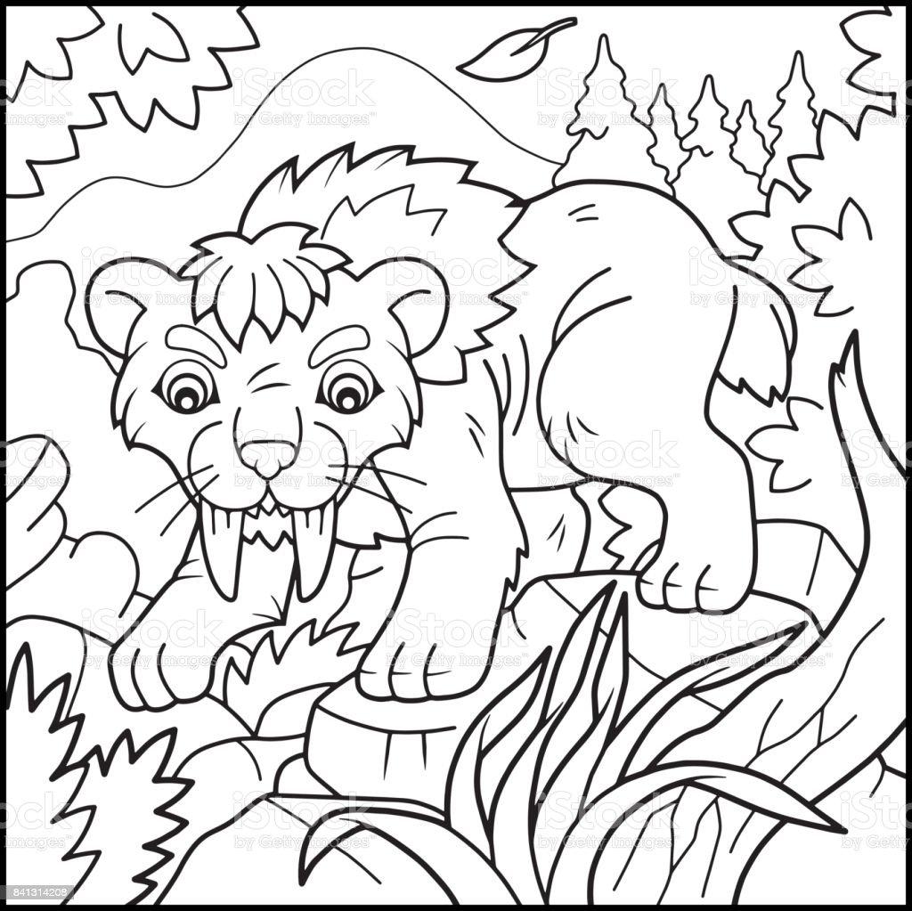 Ilustración De Tigre Dientes De Sable Para Colorear Libro Y