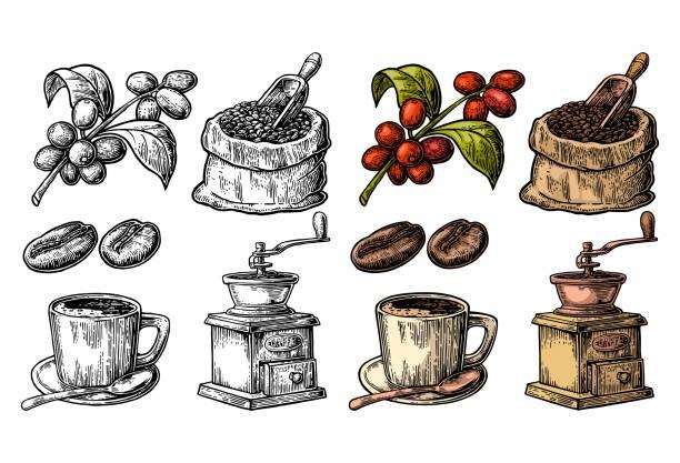 ilustrações, clipart, desenhos animados e ícones de saco com os feijões de café com colher e os feijões de madeira, copo, filial com folha e baga. - café