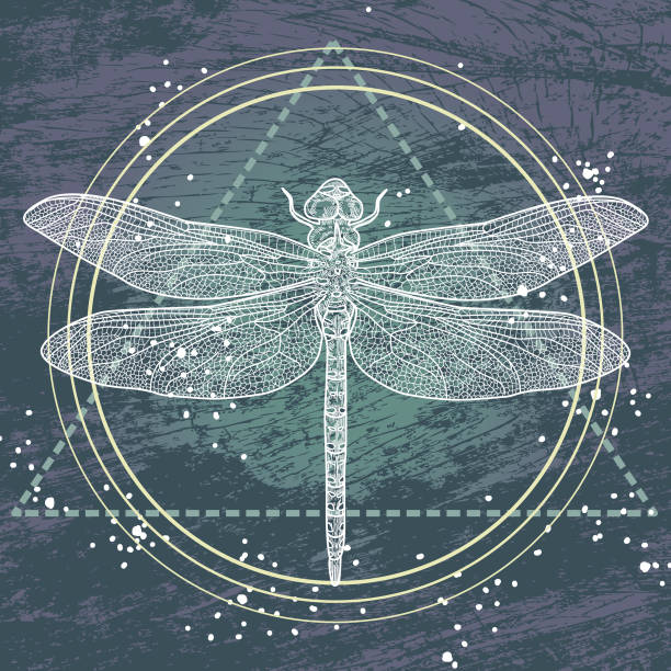 Sacred Geometry Dragonfly vector art illustration