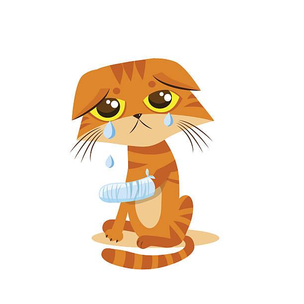Best Injured Cat Illustrations, Royalty-Free Vector ...