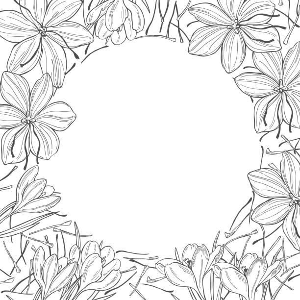사프란 향신료. 손으로 그린 스케치 일러스트 - 꽃밥 stock illustrations
