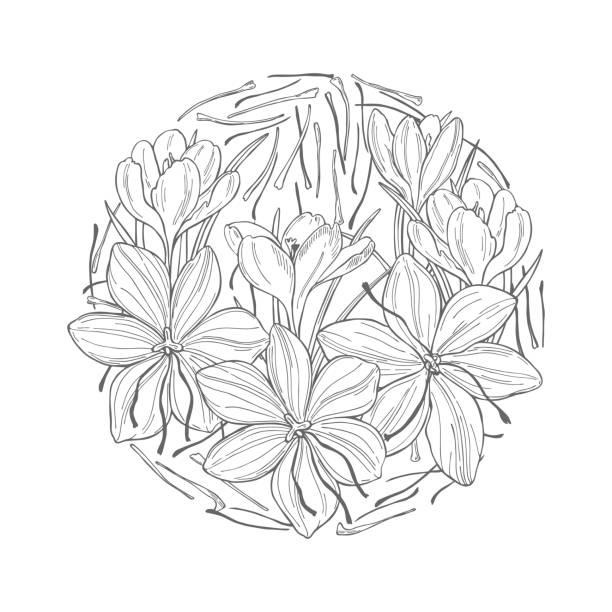 사프란 향신료. 스케치 일러스트레이션 - 꽃밥 stock illustrations