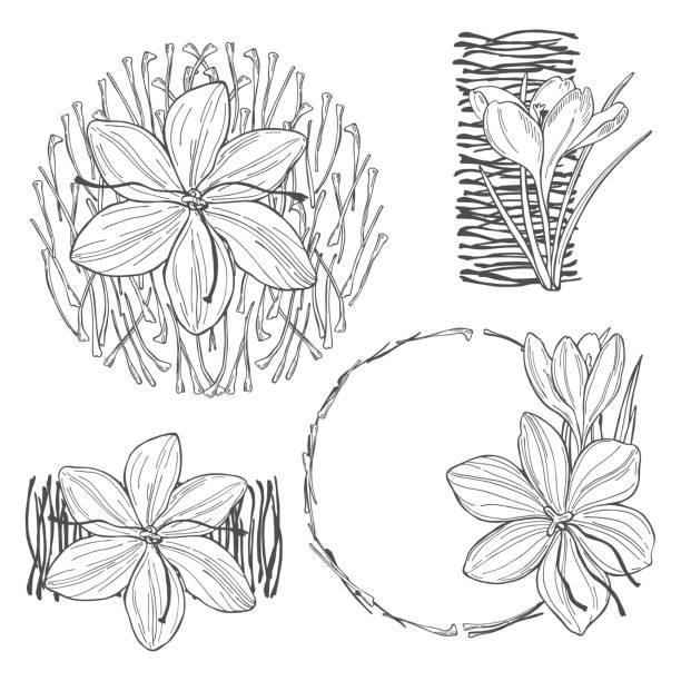 stockillustraties, clipart, cartoons en iconen met saffraan spice. schets illustratie - meeldraad