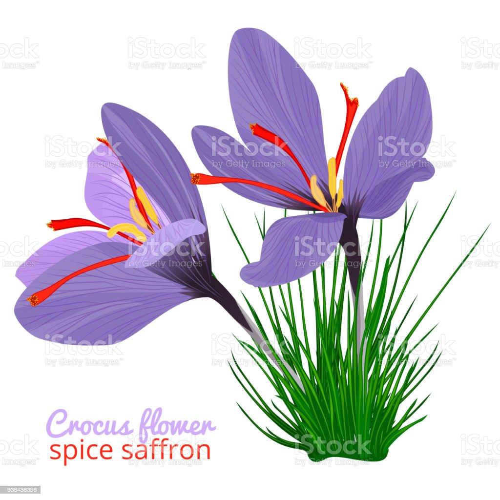 Saffron_el