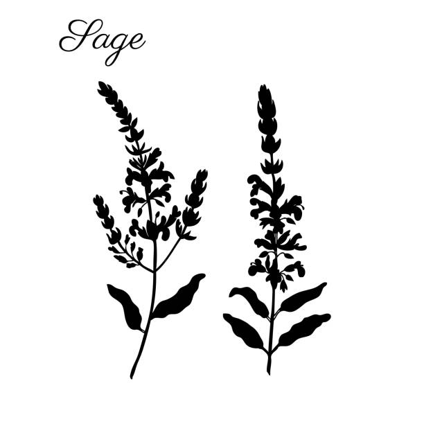 Best Artemisia Tridentata Illustrations Royalty Free Vector