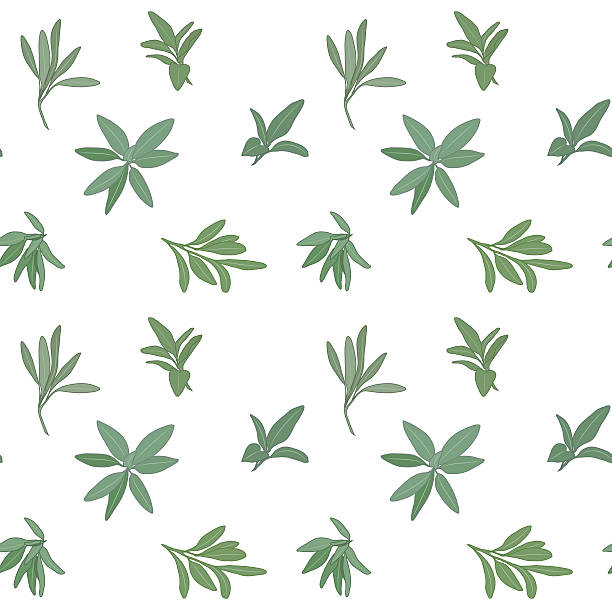 sage seamless pattern - sage stock illustrations, clip art, cartoons, & icons