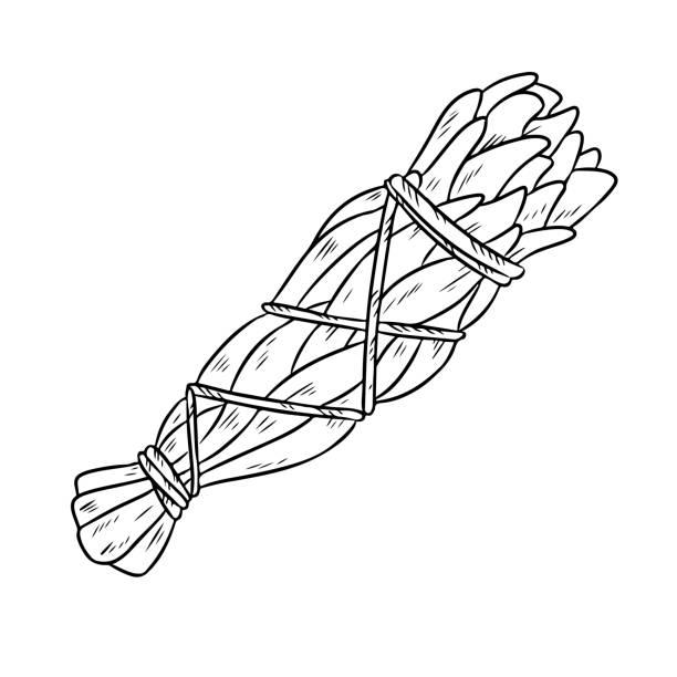 Sage smudge stick hand-drawn doodle isolated illustration. White sage herb bundle Sage smudge stick hand-drawn doodle isolated illustration. White sage herb bundle bundle stock illustrations
