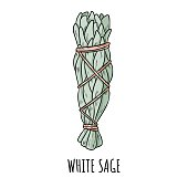 Sage smudge stick hand-drawn doodle isolated illustration. White sage herb bundle