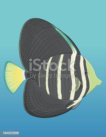 Sailfin Tang fish from the Indian Ocean, South Pacific and the Red Sea. Poisson chirurgien voilé originaire de l'ocean Indien,du Pacific Sud et de la Mer Rouge. Also available / Aussi disponible  en version Illustrator CS2