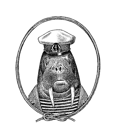 Sailor walrus character or mariner sea cow. Hand drawn Animal person portrait. Engraved monochrome sketch for card, label or tattoo. Hipster Anthropomorphism