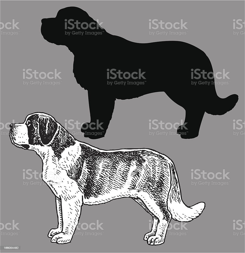 Saint Bernard - Dog, domestic pet vector art illustration